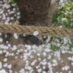 huweisheng